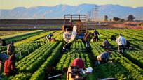 TÜİK: Tarımsal girdi fiyat endeksi arttı