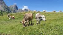 İsviçre'nin yeni modası: Vegan süt