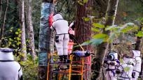 ABD'de katil eşek arılarına film gibi operasyon