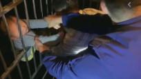 Çinde 13'üncü kattan düşen çocuğun mucize kurtuluşu