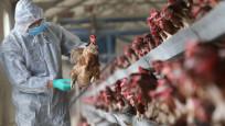 Hırvatistan'da kuş gribi salgını patlak verdi