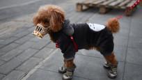 Korona virüs tespit edilen evcil köpek karantinaya alındı