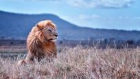 Dünyanın en iyi vahşi hayat fotoğrafları
