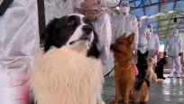 İran'da köpekler korona virüs taşıyan hastaları tespit etmek için eğitiliyor