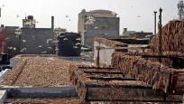 Hindistan'dan inanılmaz görüntüler: Çekirgeler bir şehri işgal etti!