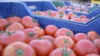Rusya'ya domates ihracatında kota engeli