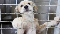 O ülkede bir eyalette köpek eti satışı yasaklandı