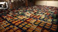 Rusya'ya yaş meyve sebze ihracatı arttı
