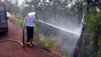 Kamyon devrildi, 3.5 milyon arı ormana yayıldı