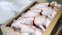 Çin'de dondurulmuş tavuklarda korona virüs tespit edildi