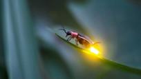 Böceklere karşı sokak ışığı formülü