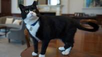 Diplomat kedi Palmerston İngiltere Dışişleri'nden emekli oldu