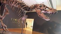 67 milyon yaşındaki dinozor iskeleti açık artırmayla satılacak