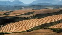 Tarım sektörünün kredi stoku 121 milyarı aştı