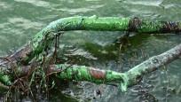 Eyüpsultan'da göle kimyasal atık boşalttılar