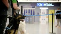 Finlandiya'da havaalanında eğitimli köpekler Kovid-19 taraması yapıyor