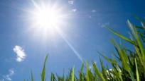 Korona virüse karşı D vitamini