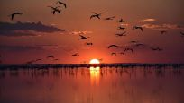Tuz Gölü'ndeki misafir flamingoların göçü başladı