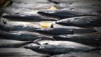 Nesli tehlikede: Gelecek nesil şoklanmış balık yiyecek!