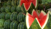Karpuz ihracatı 21 milyon doları aştı