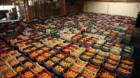 Yaş meyve ve sebze ihracatında zirve Rusya'nın