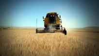 TÜİK: Buğdaydan nohuta pek çok ürün risk altında!