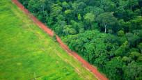 Dev bankalar ormanları yok eden firmalara 157 milyar euro destek verdi