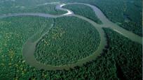 Facebook aracılığıyla satılık Amazon yağmur ormanları