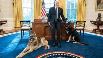 Joe Biden'ın köpeğinden yeni vukuat