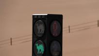 Çin'de develere özel trafik lambası
