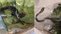 Marul poşetinden canlı yılan çıktı!