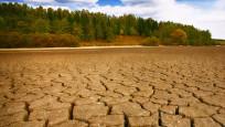 İklim krizine karşı yıllık 4,4 trilyon dolar yatırım lazım