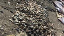 Kaçak 500 kilo inci kefali avlayan 14 kişiye, 26 bin TL ceza