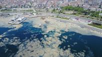 Marmara Denizi'nde salya araştırması