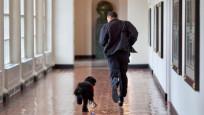 Barack Obama'nın köpeği Bo öldü