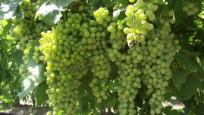 Şarapçı ve sirkecinin 'Kavaklıdere' kavgası
