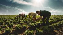 Fahiş yem fiyatı çiftçiyi vuruyor