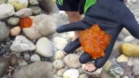 Poşet sandı... Nadir görülen deniz canlısı çıktı!
