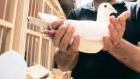 Milyon euroluk güvercinin yavruları Türkiye'de