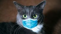 Kedilerin Koronavirüse yakalanma ihtimali köpeklerden yüksek