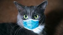 Kedilerin korona virüse yakalanma ihtimali köpeklerden yüksek