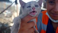 Yangında yaralanan hayvanlara tedavi