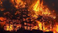 Yangın alanları afet bölgesi oldu