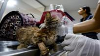 Manavgat'taki yangından etkilenen hayvanlar için seferberlik