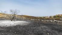 Yerküre yoğunluğu artan orman yangınlarının etkisi altında