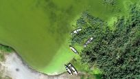 Uluabat Gölü, yeşile büründü!