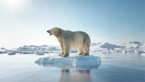 Arktik deniz buzunun kalbi bu yaz tamamen eriyebilir
