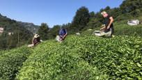Türkiye'den 110 ülkeye çay ihracı