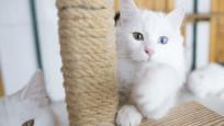 Bilim insanları kedi videoları izleyecek gönüllüler arıyor