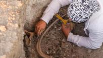 Kahramanmaraş'ta bulunan fil fosilleri incelemeye alındı!